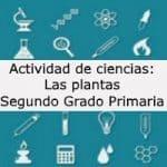 Actividad de ciencias: Las plantas – Segundo grado primaria