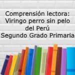 Comprensión lectora: Viringo perro sin pelo del Perú – Segundo grado primaria
