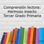 Comprensión lectora: Hermoso Insecto – Tercer grado primaria